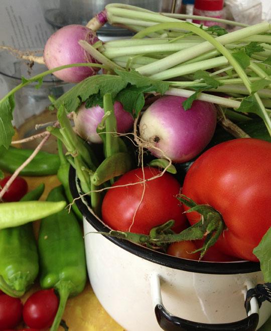 turnipharvest